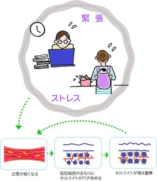 交感神経・副交感神経のイメージイラスト
